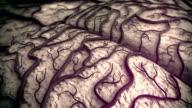 Brain Model video