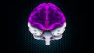 Brain Parts video