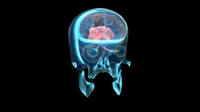 Brain Scan video