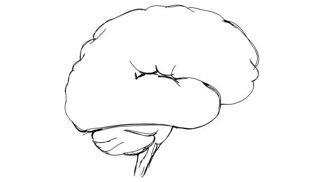 brain sketch video