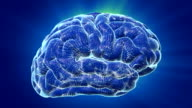 Brain Waves video