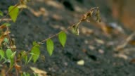 branch elm leaves video