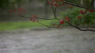 Branch in storm, with passing cars -HD720p, NTSC video