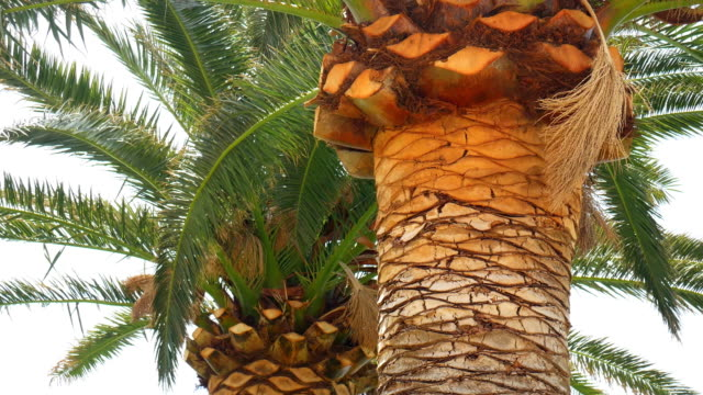 A branch of a palm tree close-up video