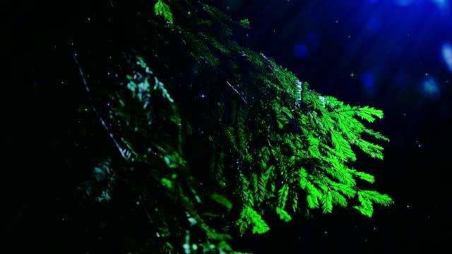 Branch of fir tree video