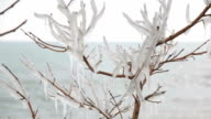 branch of tree, covered ice with sea on background video