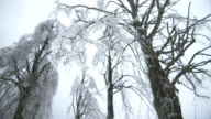 Branches Broke From The Sleet video