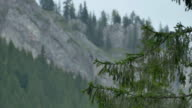 Branches of Fir and Mountains video