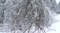 Branches Sagging After An Ice Storm video