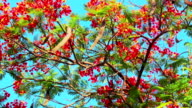 branches with flowers of blossom tree against sky video
