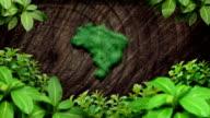 Brazil map grass forest video