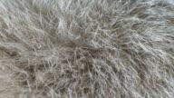 Breathing animal fur video