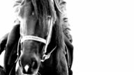 Breathing of black horse in winter video