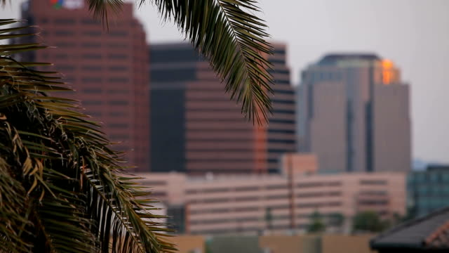 Breeze Blowing Palm Fronds as a Bird Flies Through video