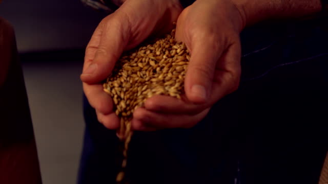 Brewery worker pouring hop grains video