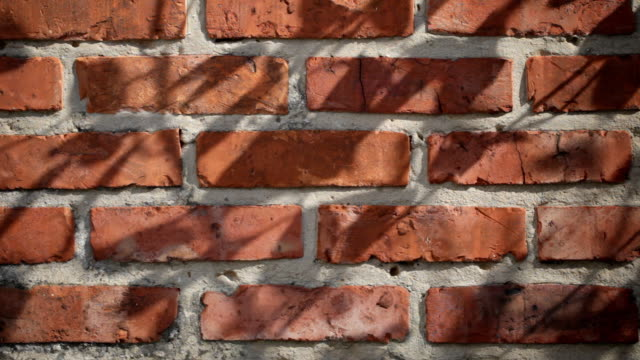 Brick wall with leaf shadows video
