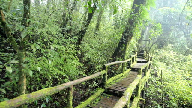 Bridge in to the jungle at Doi inthanon national park video