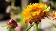 Bright flowers of India sunny day video