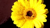 Bright flowers of India video