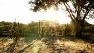 Bright sun rays shining down on new trees in apple orchard video
