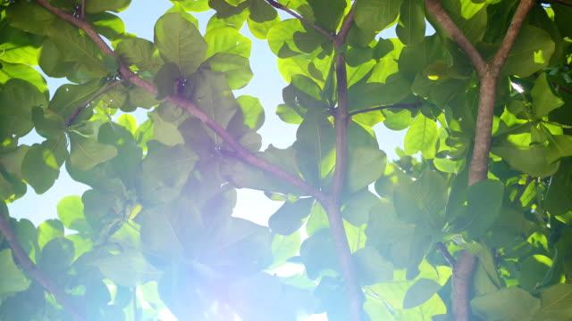 bright sunlight shining breaking through the foliage video