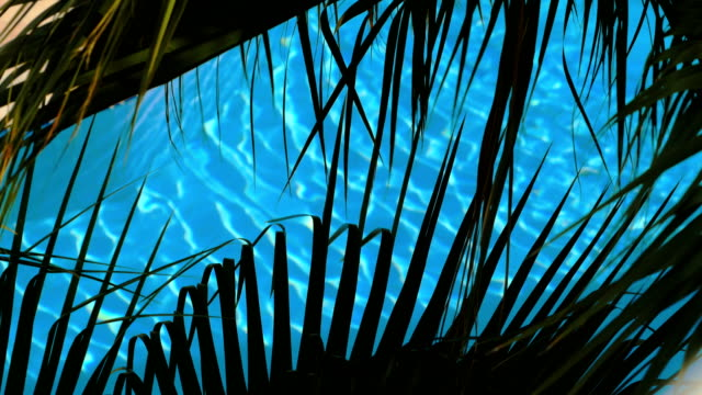 bright turquoise water in luxury pool, view through dark green leaves of palm video