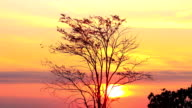 Brilliant orange and yellow colour of sunrise in morning video