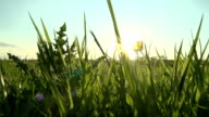 British Countryside At Sunset video