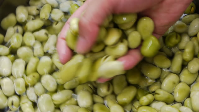 Broad bean soaked in water video