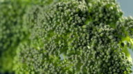 Broccoli Stalk Falls and Bounces on a Kitchen Table in Slow Motion video