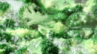 Broccoli to boil video