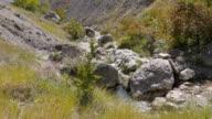 A brook runs through the mountains. Crimea. Zelenogorie video