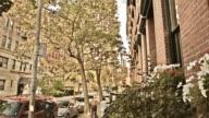 Brooklyn buildings in New York video