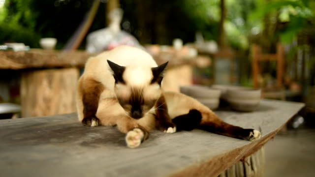 Brown cat lying on wood table video