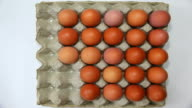 brown eggs in tray video