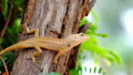 Brown lizard, beauty colorful background blur. video