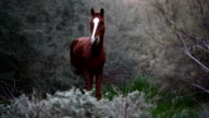 brown wild horse in nature video