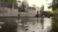 Brugge Belgium Swans and Bridge (HD) video