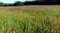 Brushy Creek Lake Park Wild Flowers Pan Shot Texas Wild Flowers Shot in 4K video