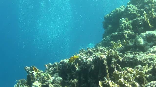 bubbles on reef dahab video