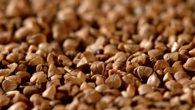 Buckwheat, rotation video