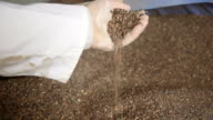 Buckwheat video