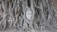 Buddha head in tree video