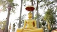 Buddha statue in teak forest video
