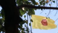 Buddhist Flag video
