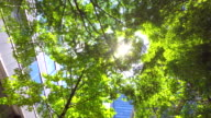 Building with green -4K- video