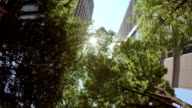 Building with green - look up at the sky video