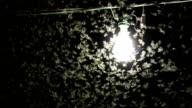 Bulb with swarming insects video
