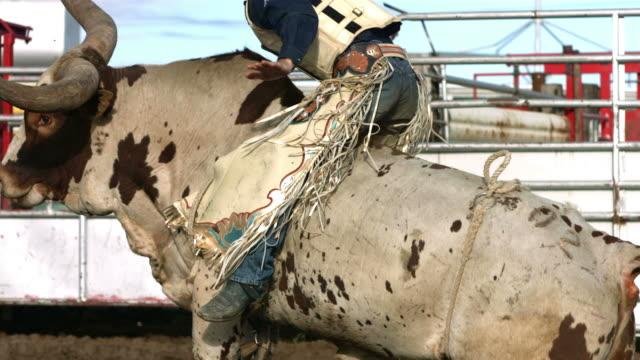 Bull riding, slow motion video