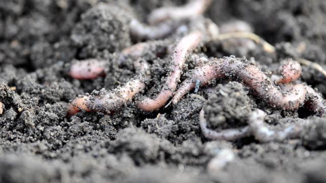 bunch of crawling worms closeup video